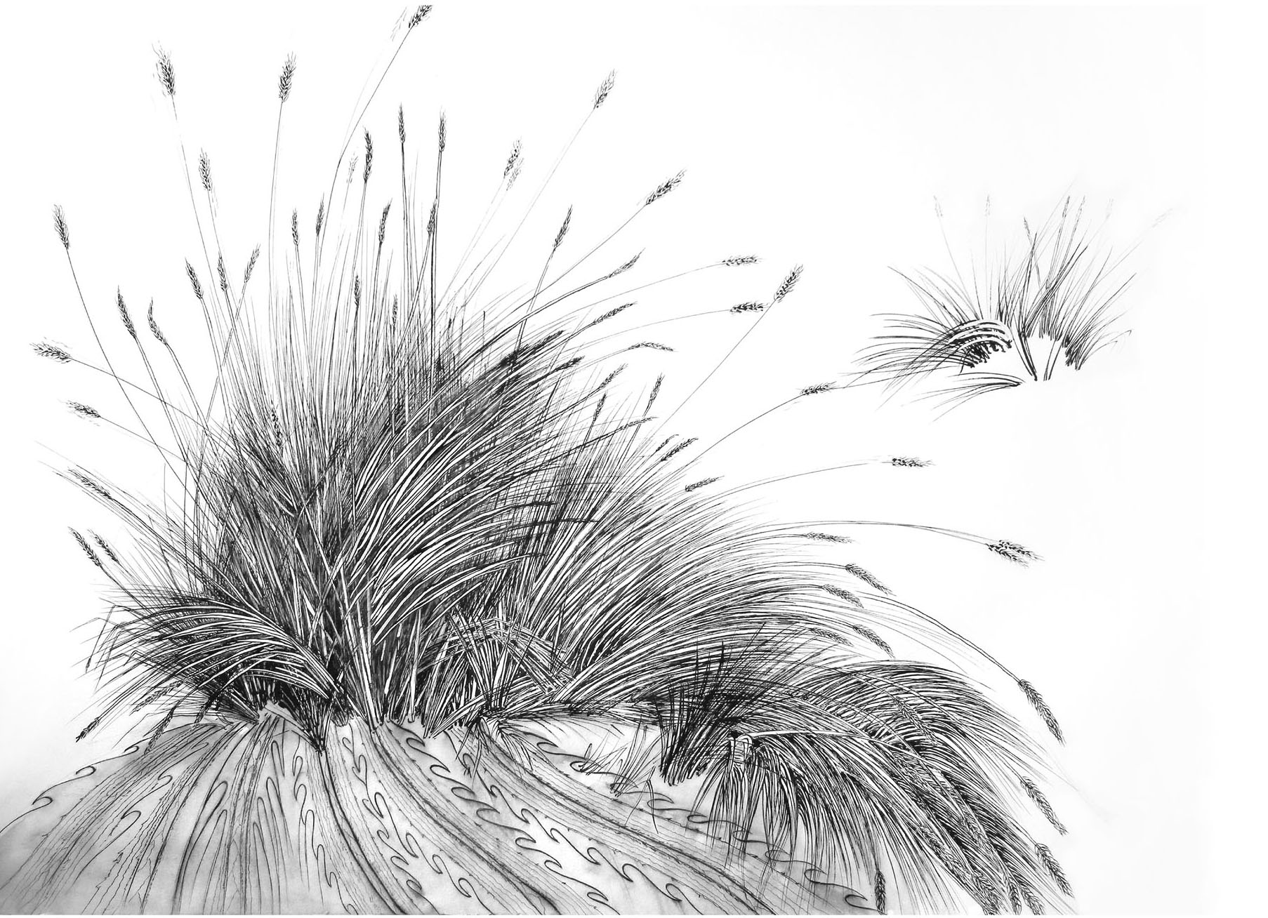 Line Drawing Grass : Dune grasses nina vallion fine art